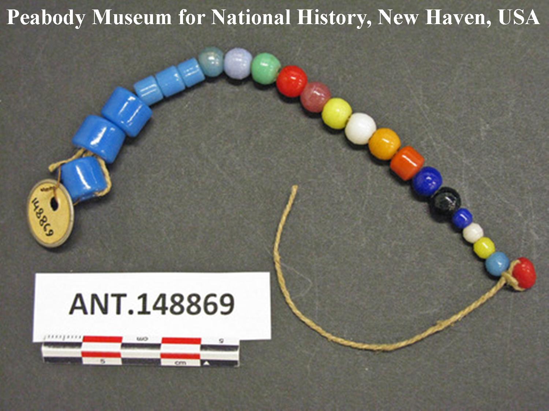 """Abb. 7: """"dau"""", eingeführte Glasperlen. Auf """"cylindrical or spherical light-blue glass beads, 6 mm long"""", an anderer Stelle """"large (6 mm)"""" stützte Pospisil die Bewertung der übrigen Geldformen. Ich unterstelle, dass die 3 Perlen links gemeint sind. Beschreibung: String of trade glass beads used in 1955 as a trade article with the natives. Length 6 in. """"dau"""". Southern Kamu Valley, Kapauku, Netherlands New Guinea."""